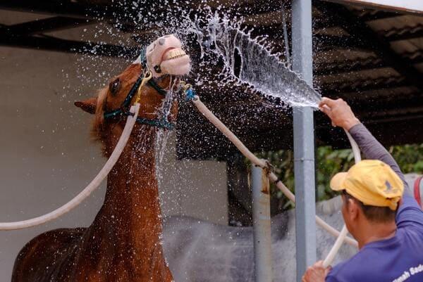 馬に水をかけている画像