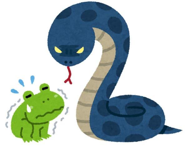 蛇に睨まれた蛙のイラスト