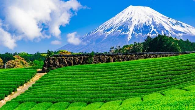 静岡県の観光スポット画像