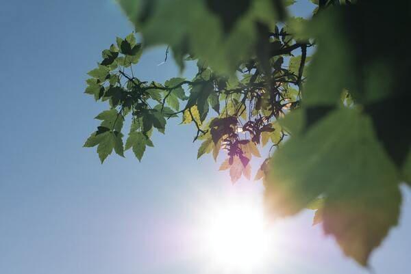 日差しの画像